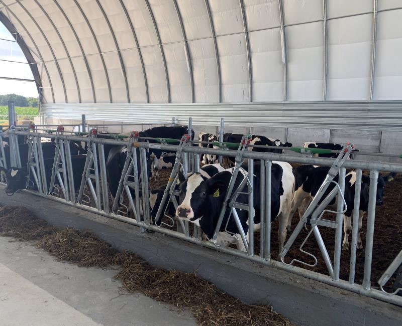 Wiata tunelowa dla bydła(male)
